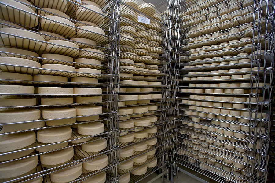 La fromagerie Fischer : stockage de munsters